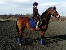 Stunning 14. 2 hh mare with amazing potential