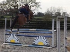 Genuine Showjumping or Eventing Prospect