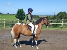 13hh coloured mare