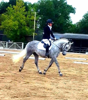 Super Talented Future BS/BE/HOYS M&M WHP/Competition/Allrounder