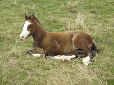 Afterglow, Danaway Filly Foal