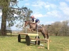 Safe Talented SJ/PC 9 year old pony