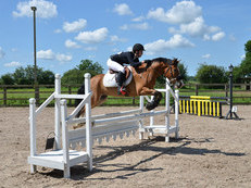 Talented pony for loan