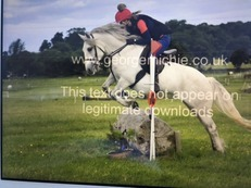 Highland Mare 7yro 13.2hh Grey (unregistered)