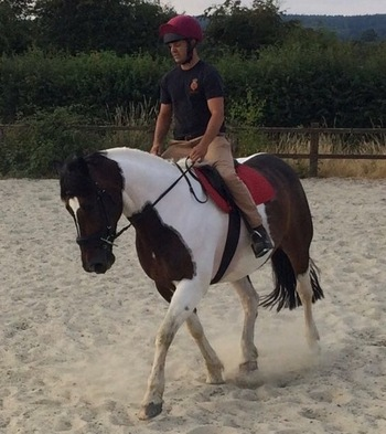 16.2hh exceptionally well marked 10yo skewbald gelding