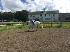 Smart registered Connemara gelding, 15hh