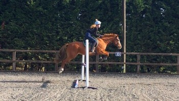 Teenager's First Horse - 15.2hh Allrounder