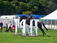 Super eventer/all rounder competition horse with manner to die for.