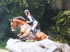 Genuine 15hh horse for loan