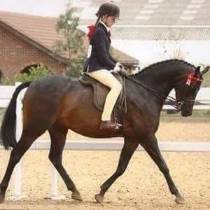 Beautiful 138cm show pony