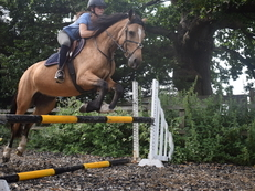outstanding  dun mare Must BE SOLD NO UNREASONABLE OFFER REFUSED