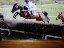 Lovely genuine ex racehorse for sale