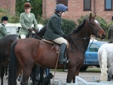 SUPERB 5 YEAR OLD MARE LUPICOR 16HH SUPER SWEET & EASY