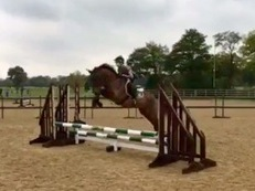 Exceptionally Talented Mare 4yrs 15hh