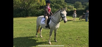 One in a million Welsh Section C 12.1hh pony for sale