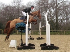 Perfect Young Riders/Amateur Adult Competition ShowJumper