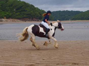 14.1 HH Coloured Cob