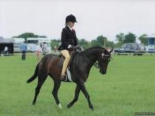 133cm British Riding Pony