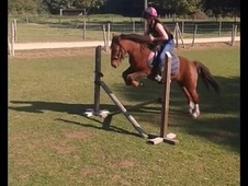 Project showjumping pony