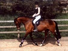 Full loan to stay at current yard 15. 3hh forward hack/allrounder