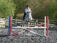 12 year old Irish Sports Horse grey mare, all round easy to do ho...