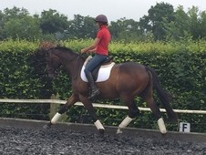 Super Allrounder / Dressage