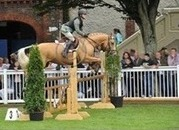 5yr Old Palomino 15.1hh Stunning All-Rounder/Competition Horse
