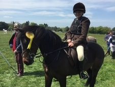REDUCED AS NEW PONY ARRIVED £2995. 00 ONO Beautiful 12. 3 Irish ...