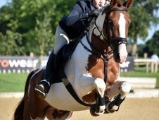 Gorgeous warmblood for sale