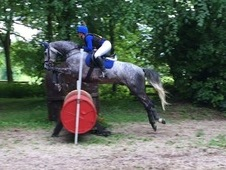 Grey 16. 3hh 8yr old gelding. Safe and sensible, has potential to...