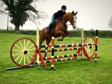 15. 3 chestnut mare four years