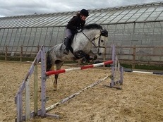 14.1 loving, fun mare for sale/full loan