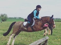 14-15 hh gelding wanted