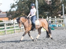 Exciting BYRDS/FEI Pony