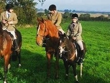 14hh 7yo PC/hunting pony