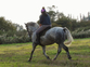 Absolutely amazing, Irish draught 8 yr gelding for sale in United Kingdom