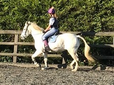 New Forest Mare 13.2 - 12 years