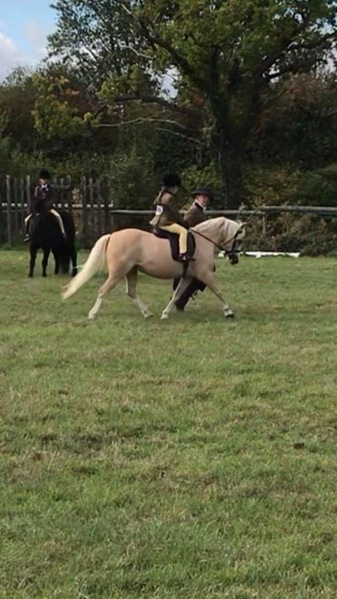 Lead Rein M&M Palomino Mare