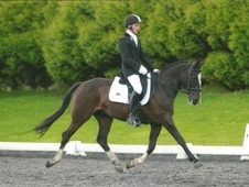 Striking part bred Hanoverian