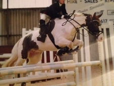 Show Jumping and Cross Country Superstar