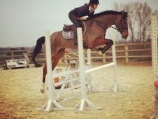 Perfect allrounder / eventer