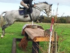 15hh ultimate alrounder