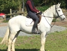 Fun Allrounder for Sale Dorset