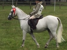 11. 2hh lead rein pony for loan