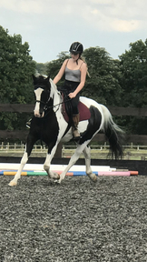 15.2hh ISH for sale