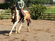 SEEKING A 15. 2h-16h GELDING ON LONGER-TERM FULL LOAN