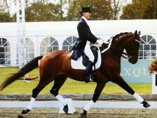 Dressage / Flatwork Clinic with June Long