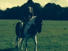 14hh 1in coloured gelding