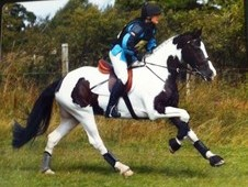 smart little eventer/ CHAPs pony