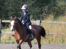 Lovely Natured 12HH Sec A Welsh Pony Gelding
